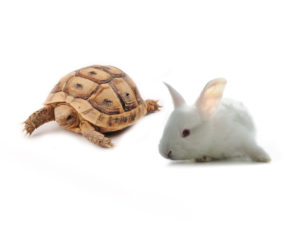 Hare And Turtle