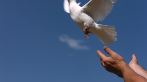 Bird flying away like stress when you let it go