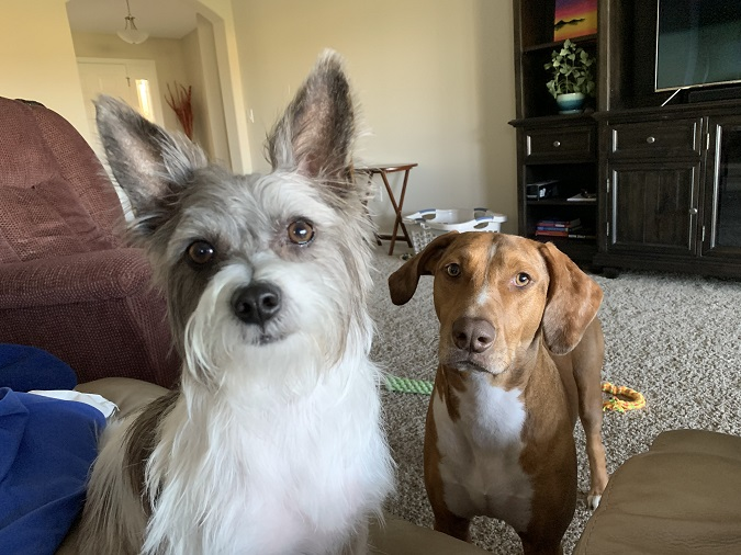 Dezzi and Jack, my Digital Marketing Sales at-home support team