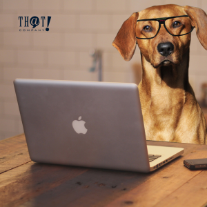 Content Writing Ideas | A Dog Wearing Eyeglasses In Front Of A Laptop